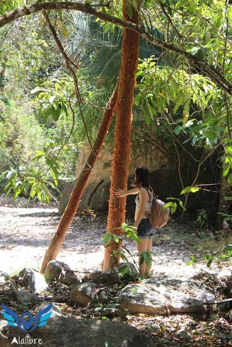 Paper Tree at El Nogalito