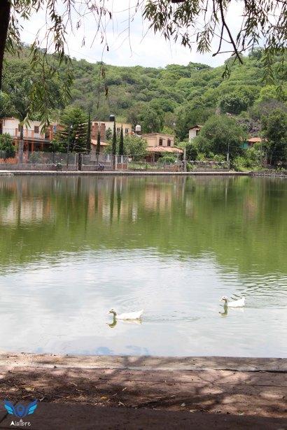 Ducks at La Yerbabuena's Lake.